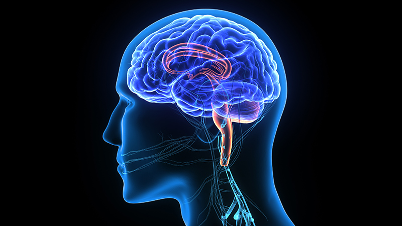 Fact you should know about Neurosurgery treatment